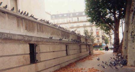 pigeons_rue_paris_en_450
